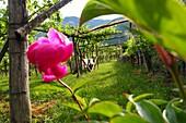 Near Kaltern, South Tyrol, Italy