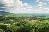 Near Königsbach on the Palatinate Wine Route, Rhineland-Palatinate, Germany
