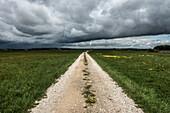 Straight gravel road in Donaumoos, Koenigsmoos, Bavaria, Germany