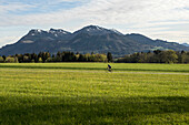 Racing cyclists in front of the Hochries, Prien, Bavaria, Germany