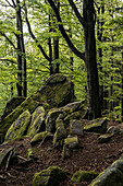 Out and about in the Palatinate Forest, Hermersbergerhof, Rhineland-Palatinate, Germany