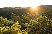Sunrise at Kreuzstein in the Palatinate Forest, Busenberg, Rhineland-Palatinate, Germany