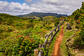 A hiking trail in the colorful nature around Furnas do Enxofre in the Azores