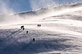 Mountain walkers, Cairngorm mountains, winter, snow, blizzard, Aberdeenshire, Scotland, UK