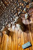 Stag Ballroom, ballroom, Mar Lodge, 2500 deer trophies collected since 1790 in wooden hall, Deeside, Aberdeenshire, Scotland, UK