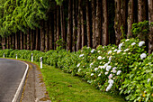 At the roadside of an island road, different trees stand closely and form an impenetrable wall