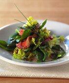 Green salad with roast beef