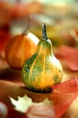 Ornamental squashes as table decoration