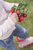 Child holding radishes in garden