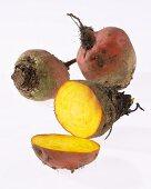 Yellow beetroot 'Burpees Golden'