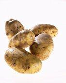Five potatoes, variety 'Victoria'