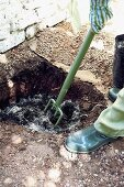 Planting an espalier tree: digging a hole