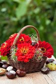 Zinnias, clematis seed heads and chestnuts in basket