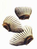 Three dried fugu fins