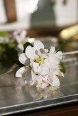 Apple blossom on metal box