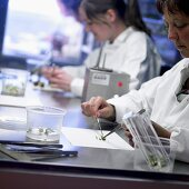 Plants being examined in a laboratory