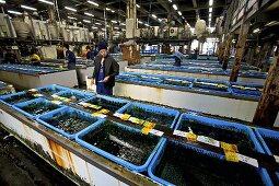Shellfish tanks at Tsukiji Fish Market in Tokyo