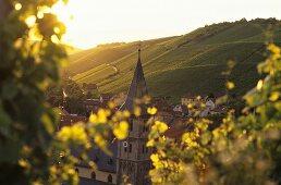 Wine-growing around Randersacker, Franconia, Germany