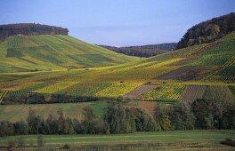 Vineyards in Bottwar Valley, Württemberg, Germany