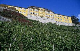 'Meersburger Rieschen' single vineyard site, below Meersburg Staatsweingut