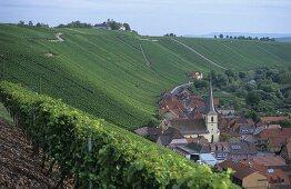 'Escherndorfer Lump' single vineyard site, Escherndorf, Franconia