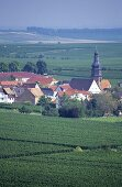'Kallstadter Saumagen' single vineyard site, Kallstadt, Palatinate, Germany