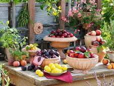 Plums, nectarines, peaches & apricots in bowls, sage, savory, rosemary & geranium in pots