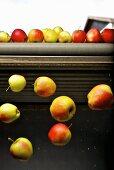 Äpfel fallen vom Förderband in Behälter