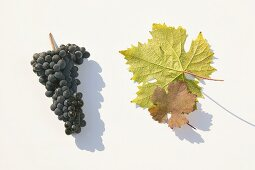 Red wine grapes, variety 'Dunkelfelder'