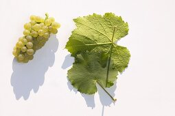 White wine grapes, variety 'Auxerrois'