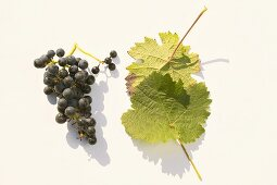 Red wine grapes, variety 'Dornfelder'