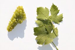 White wine grapes, variety 'Würzer'