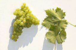 White wine grapes, variety 'Gelber Muskateller'
