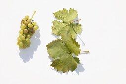 White wine grapes, variety 'Optima'