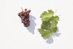White wine grapes, variety 'Perle'
