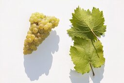 White wine grapes, variety 'Weisser Elbling'
