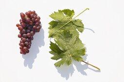 White wine grapes, variety 'Schönburger'