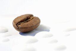 A coffee bean and milk foam (close up)