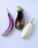 Three aubergines (cultivars: Fengyan, Diamond, Tango)