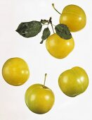 Five yellow plums