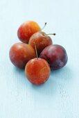 Five Ruth Gerstetter plums