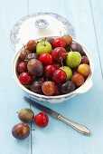 Various types of plums in a bowl