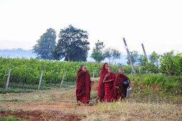 Oriental monks in a vineyard