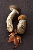 Birch bolete and orange birch bolete