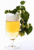 A glass of beer and hops