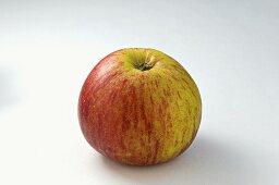 A 'Herzog von Cumberland' apple
