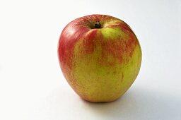 'Knebusch' apple