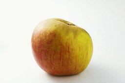 'Ribston Pippin' apple