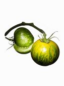 Two organic tomatoes (variety Green Zebra)