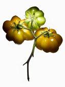 Organic tomatoes (variety Yellow Stuffer)